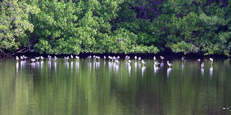 birds-estuary-img_6600-2x1-sm