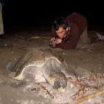 turtle-watching-01-sm
